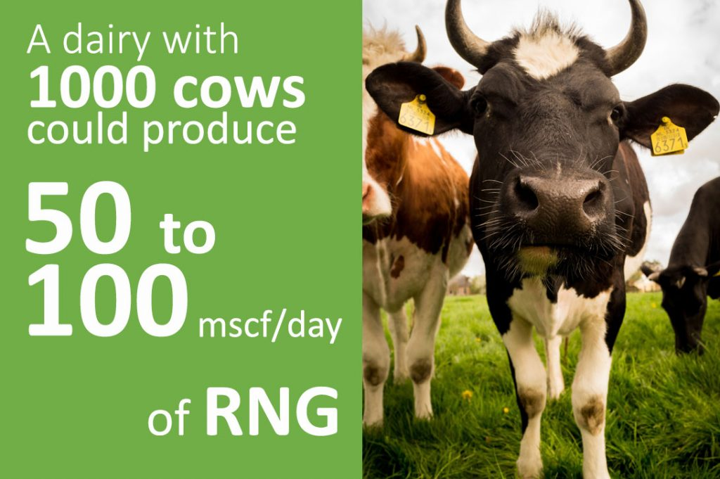 1000 cows can produce 50 to 100 mscf/day of RNG